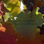 10-vinumfigura