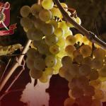 11-vinumfigura